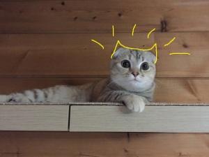 Kittyちゃんにはなれない